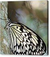 Magical Butterfly Acrylic Print