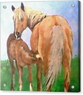 Mare And Foal Acrylic Print