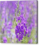 Meadow Of Violets  Acrylic Print by Kantilal Patel