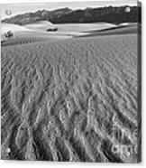 Mesquite Dunes 15 Acrylic Print