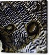 Mournful Owl Butterfly Acrylic Print