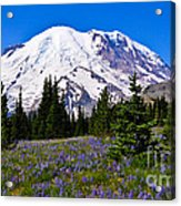 Mt Rainier From Sunrise Acrylic Print