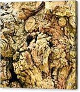 Natural Abstract 44 Acrylic Print