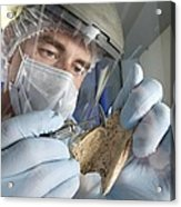 Neanderthal Dna Extraction Acrylic Print
