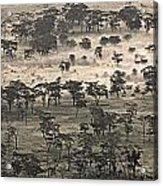 Ngorongoro Crater, Tanzania, Africa Acrylic Print by Carson Ganci
