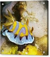 Nudibranch Acrylic Print by Georgette Douwma