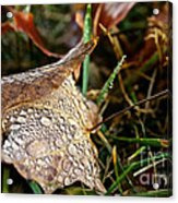 October Rain Drops Acrylic Print