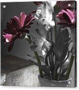 Pink Gerbera Floral Still Life Acrylic Print
