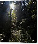 Old Forests At Evo Acrylic Print