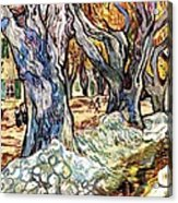 Olive Garden Acrylic Print