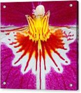 Orchid Closeup Acrylic Print