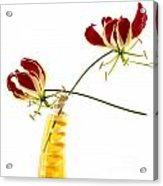 Orchids Acrylic Print by Bernard Jaubert