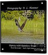 Osprey With Rainbow Trout Acrylic Print