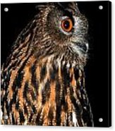 Side Portrait Of An Eagle Owl Acrylic Print