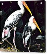 Painted Storks Acrylic Print