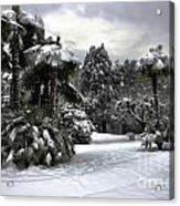 Palm Trees With Snow Acrylic Print