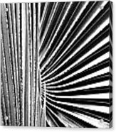 Palmetto Acrylic Print