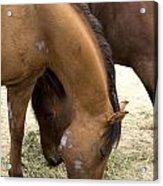 Parallel Ponies Acrylic Print