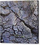 Peat Bog Acrylic Print
