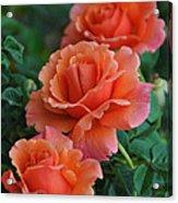 Perfectly Peach Acrylic Print