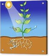 Photosynthesis, Artwork Acrylic Print by David Nicholls