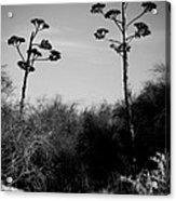 Plant Crossing Acrylic Print