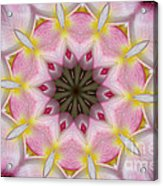 Plumeria 2 Acrylic Print