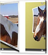 Pony Pose - Gently Cross Your Eyes And Focus On The Middle Image Acrylic Print