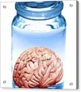 Preserved Brain, Artwork Acrylic Print