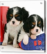 Puppies With Rain Boots Acrylic Print