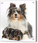 Puppy Pals Acrylic Print