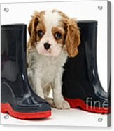 Puppy With Rain Boots Acrylic Print