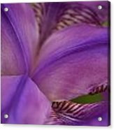 Purple Beauty Acrylic Print