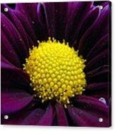 Purple Jewel Acrylic Print
