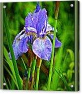 Purple Orchids Acrylic Print