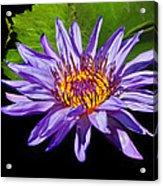 Purple Waterlily Acrylic Print