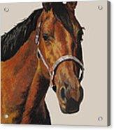 Quarter Horse Acrylic Print by Ann Marie Chaffin