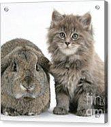 Rabbit And Kitten Acrylic Print
