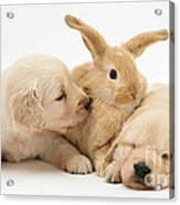 Rabbit And Puppies Acrylic Print