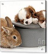 Rabbit And Spaniel Pups Acrylic Print