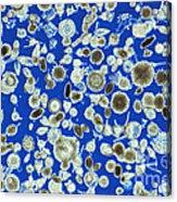 Radiolarian Ooze Lm Acrylic Print by M. I. Walker