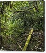 Rain Forest On Vancouver Island Acrylic Print