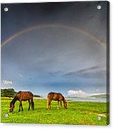 Rainbow Horses Acrylic Print