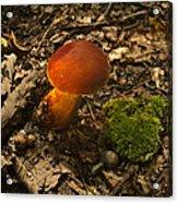 Red Caped Mushroom 3 Acrylic Print