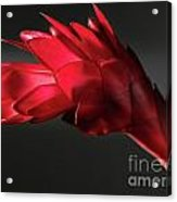 Red Ginger Alpinia Purpurata Flower Acrylic Print