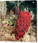 Red Sponge Acrylic Print