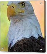 Regal Eagle Acrylic Print