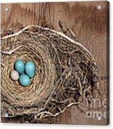 Robins Nest And Cowbird Egg Acrylic Print