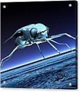 Robotic Fly, Artwork Acrylic Print