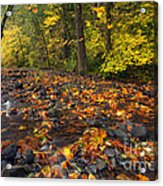 Scattered About Acrylic Print
